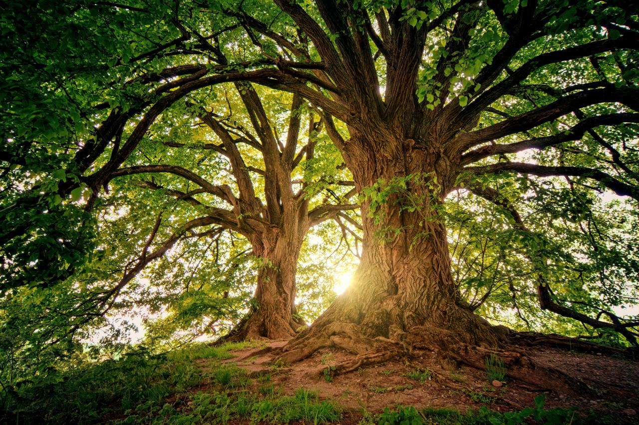 L'albero di Sandrot